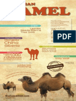 Bactrian Camel Infographic