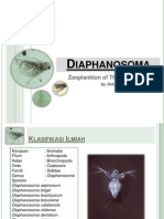 plankton, fitoplankto