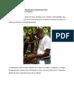 planta beneficio pos cosecha de cacao