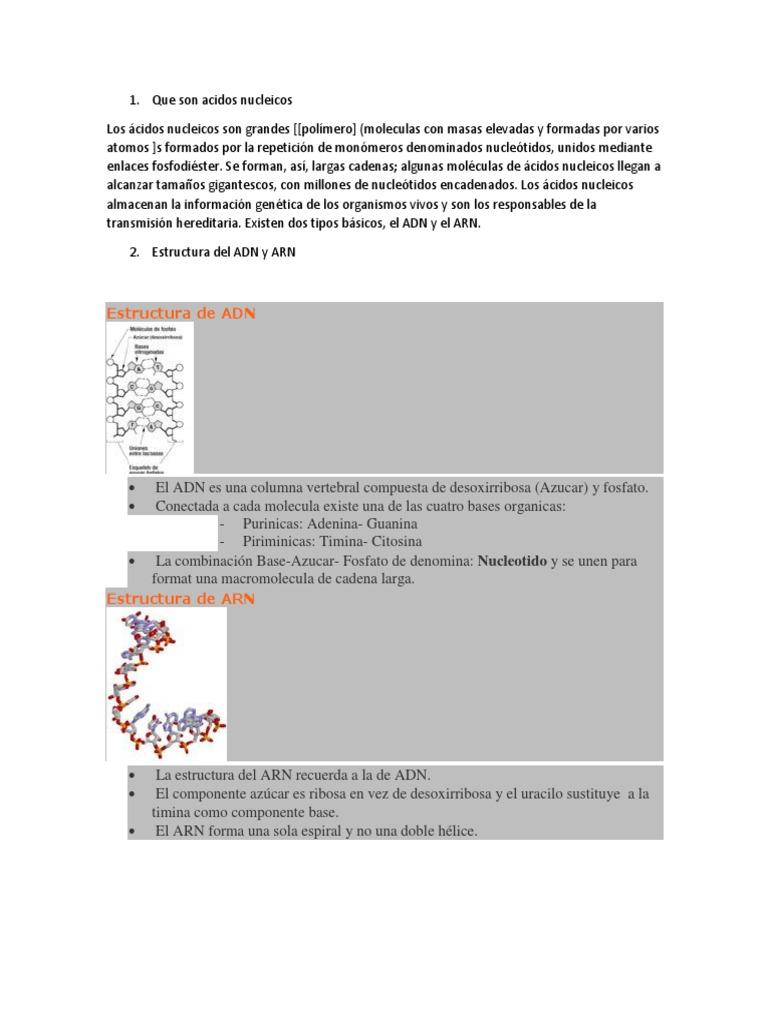 Que Son Acidos Nucleicos