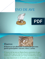 El Huevo Power Point