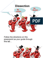 crayfish dissection pdf 2014