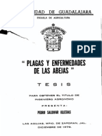 Saldivar Iglesias Pedro