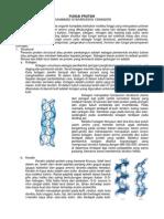 Fungsi Protein - M.syafaruddin - 1306482035