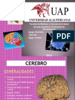 Cerebro Uap 2013