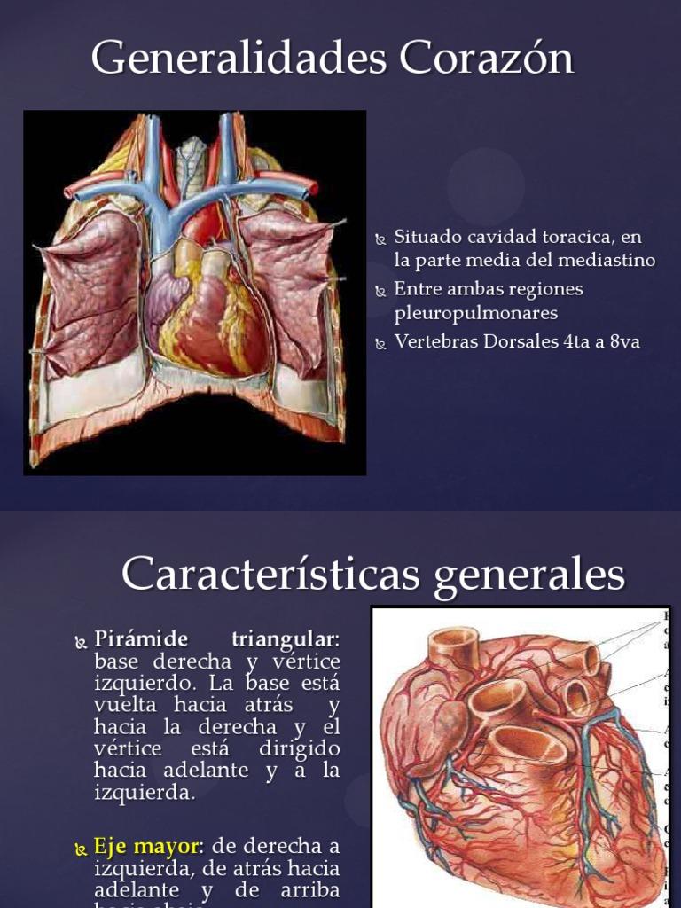Famoso Vértebras Vuelta Foto - Anatomía de Las Imágenesdel Cuerpo ...