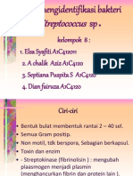 Cara Mengindentifikasi b. Streptcocus