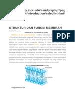 Struktur Dan Fungsi Membran