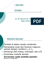 Kuliah 5 - Medulla Spinalis Dan Nervi Spinales