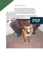 Perros que esperan ser adoptados