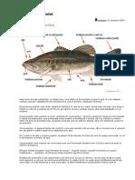 Anatomia Peştelui