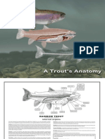 A Trouts Anatomy-web