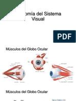 Anatomía Del Sistema Visual