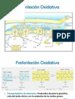 fosforilacinoxidativa-130504213953-phpapp02