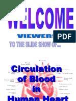 22104 Blood Circulation in Human Heart