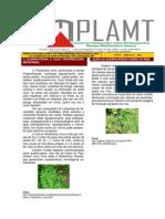 Cimplamt Ed 11