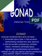 GONAD_2