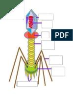 Gambar Virus t