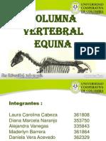 Columna Vertebral Equina (2)