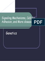 Signaling Mechanisms, Cellular Adhesion, And Stem