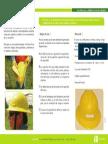 Uso del casco dieléctrico de ala completa.pdf