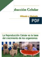 Clase 10 - Reproduccion Celular