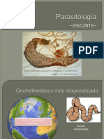 Parasitología Ascaris