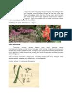 Bangsa Liliace Suku Amaryllidaceae
