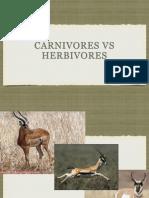 CARNIVORES VS HERBIVORES.pptx