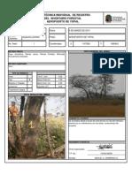 Ficha Inventario Arboles 1-10