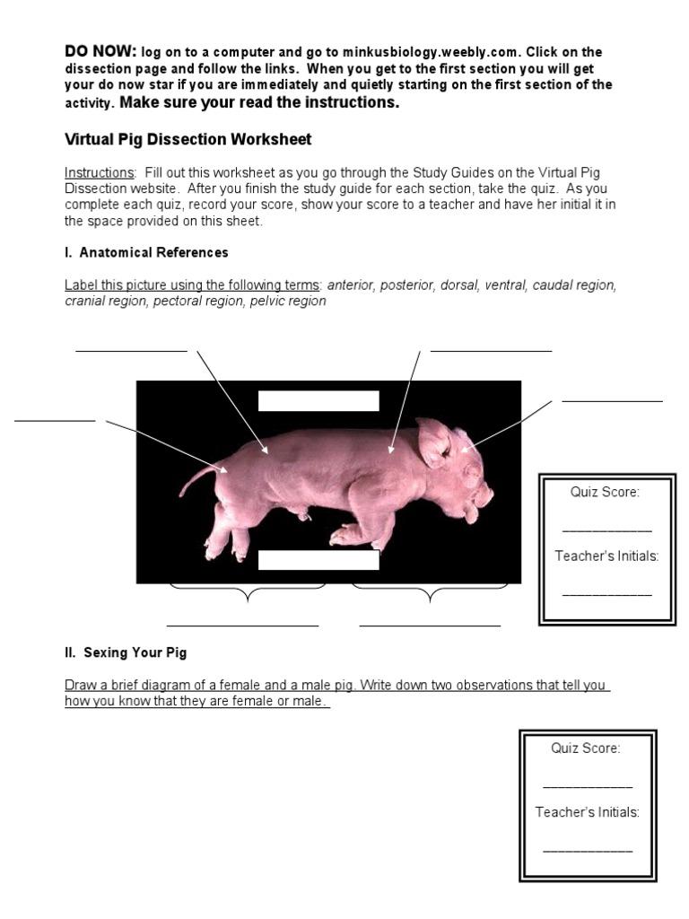 virtual pig dissection worksheet 0607 2 – Pig Dissection Worksheet