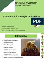 Anatomia e Fisiologia de Abelhas
