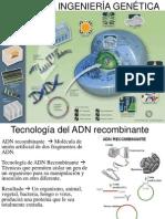 Tema16 Adnylaingenieriagenetica 110405023911 Phpapp01