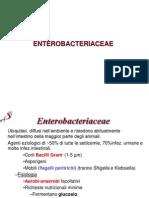 6 Enterobacteriaceae 120423122540 Phpapp02