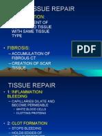 05b Tissue Repair