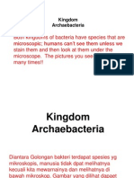 Archeo Bacteria
