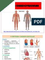 4fc68abf1723b8c8548c115b57f1767b3fdc51e731ccd Sistema Cardiovascular