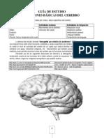 8º - Funciones cerebrales