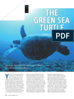 Western Critters - The Green Sea Turtle