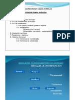 Regulación y Coordinación en Los Animales_ppt