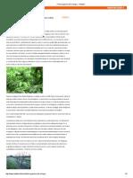 Fertirrigazione del Ciliegio - Netafim.pdf