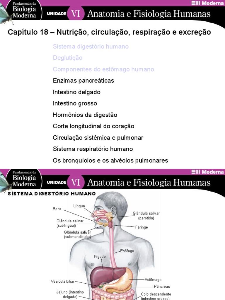 Bonito Anatomía Clep Y Examen De La Fisiología Colección de Imágenes ...