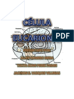 eucarionta 2