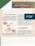 Cap.31-Nutriç_o Das Plantas