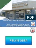 Pelvis Osea, Pelvis Parietal y Perine