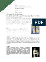08-Simbología Del Olivo