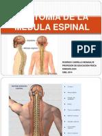 Clase 3, Medula Espinal