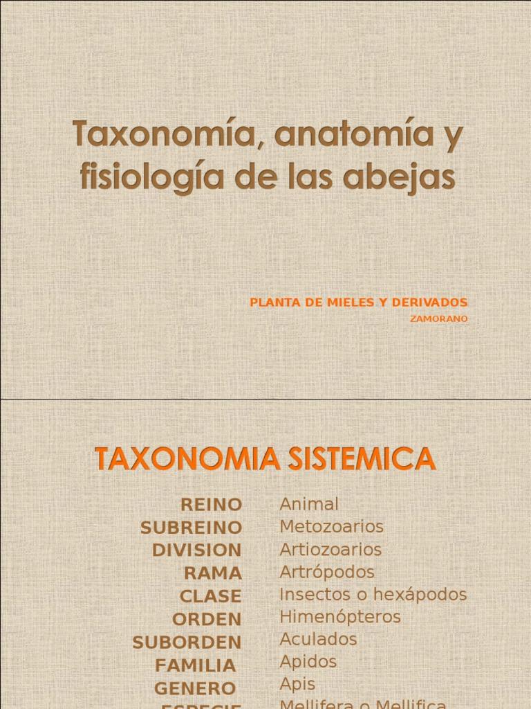 Taxonomia de Las Abejas