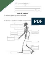 Fichas de Estudo do Meio 4º ano.doc