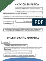 COMUNICACIÓN SINAPTICA